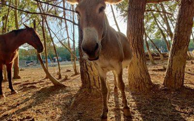 I Santuari per Animali – Ippoasi